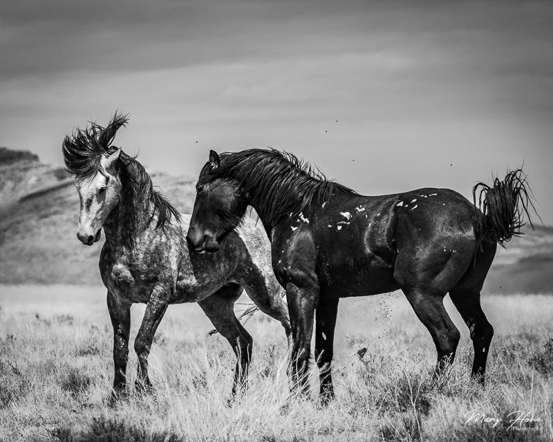 Celebrating Wild Horses in Art for #worldartday