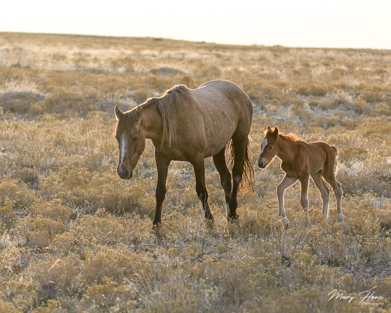 Catching up with old wild horse friends