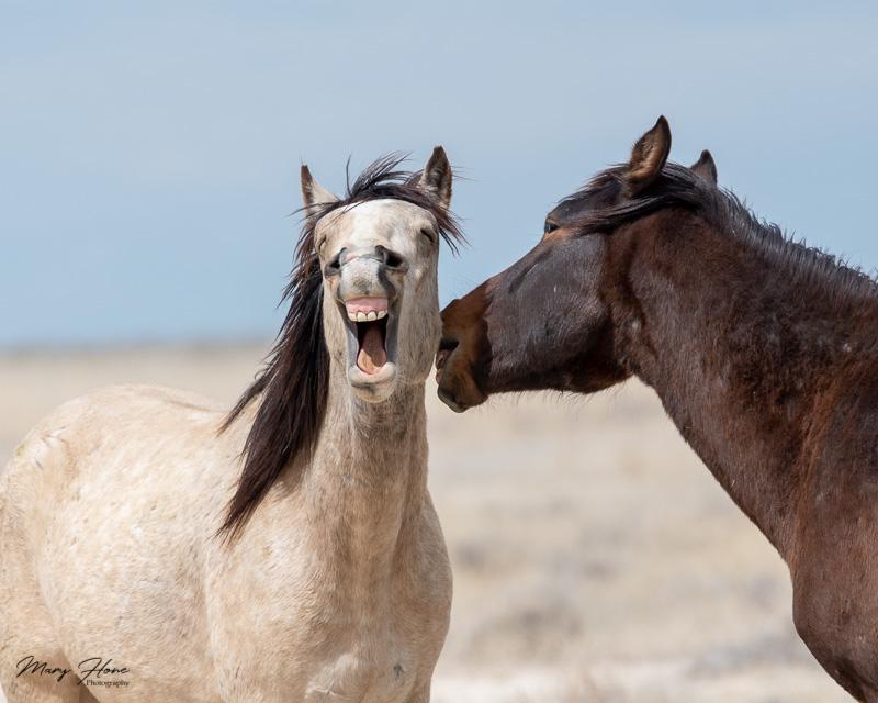 funny wild horses, Humorous Wildlife Photos