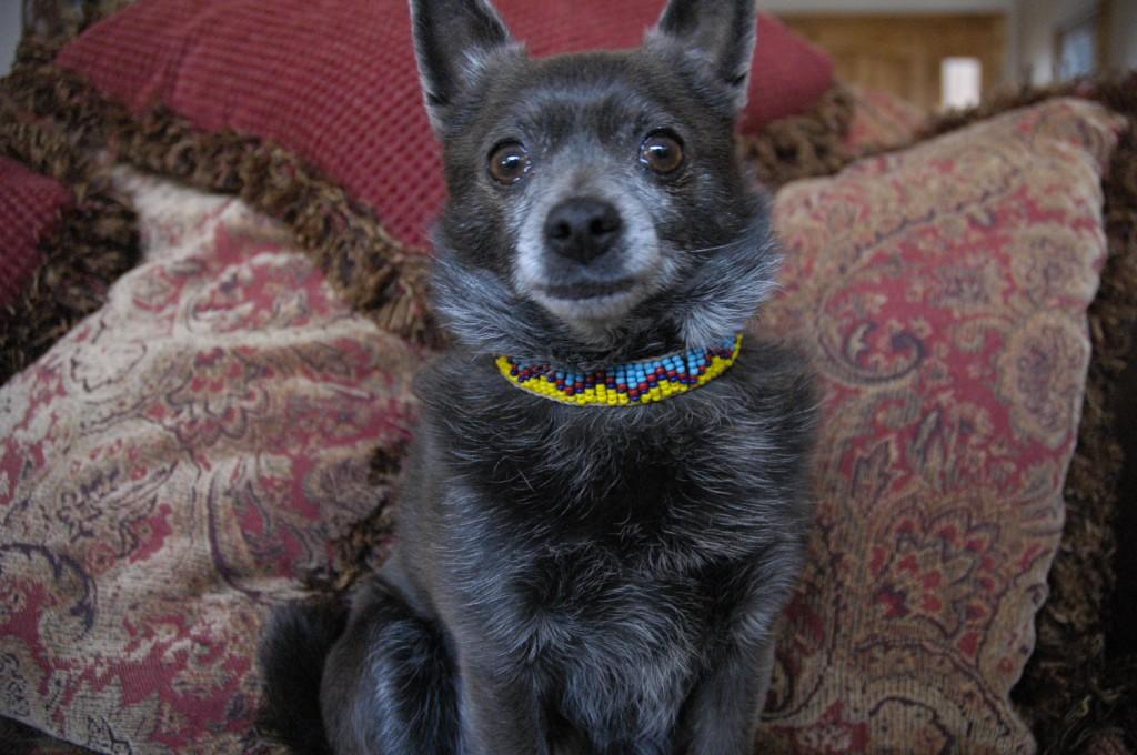 Favorite dog necklace