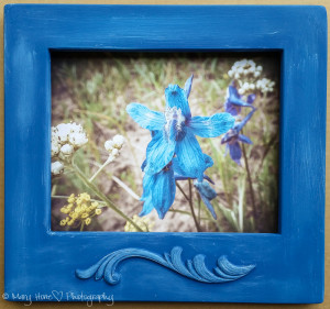 8 x 10 custom framed photo blue flower