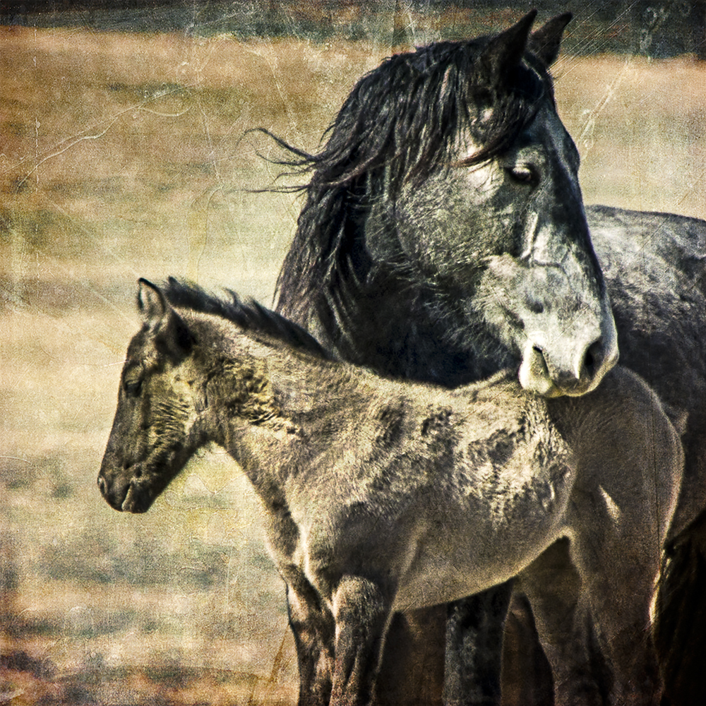 Mary Hone Photography Horses
