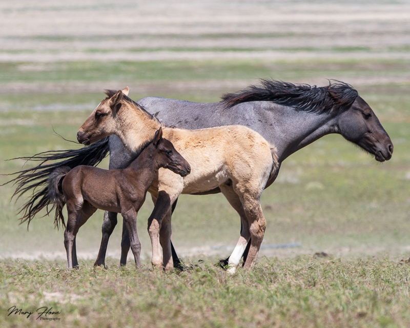 Spring with the Wild Horses