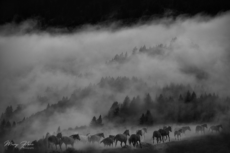 misty mountain and wild horses