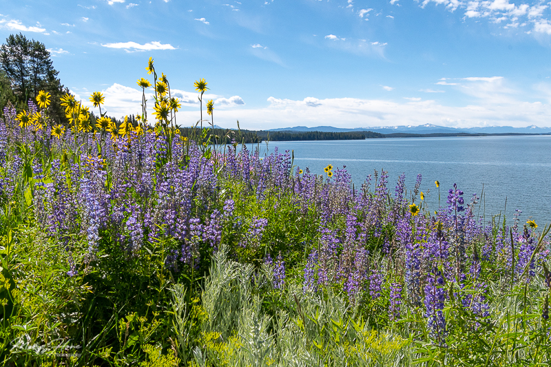 flowers and lake landscape