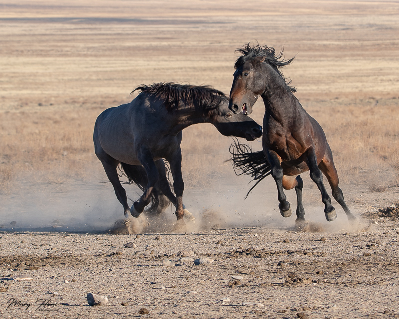 From Clicking to Creating, wild horses fighting