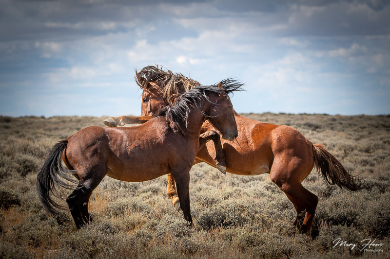 Wild Horses of Wyoming