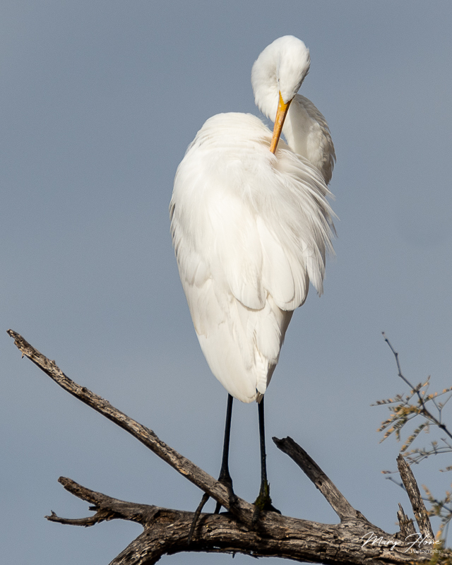 Tonto National Forest and the Salt River egret