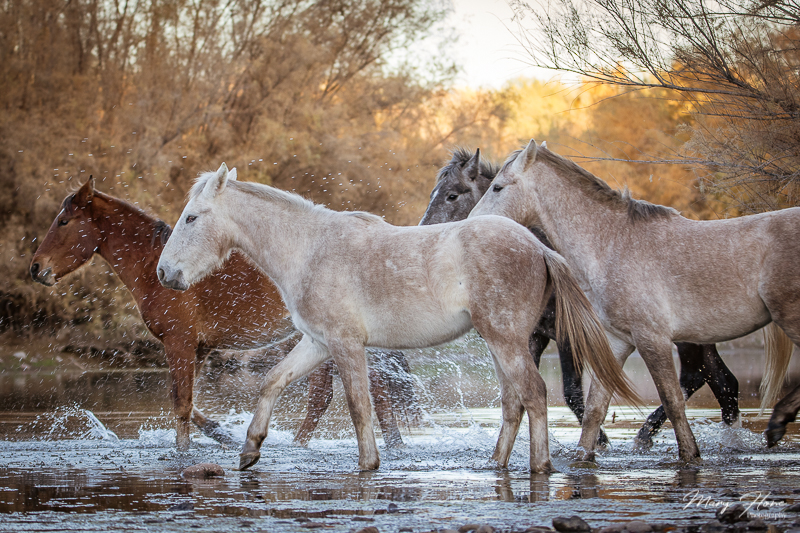 visiting the salt river wild horses