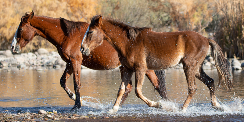 Tonto National Forest and the Salt River wild horses