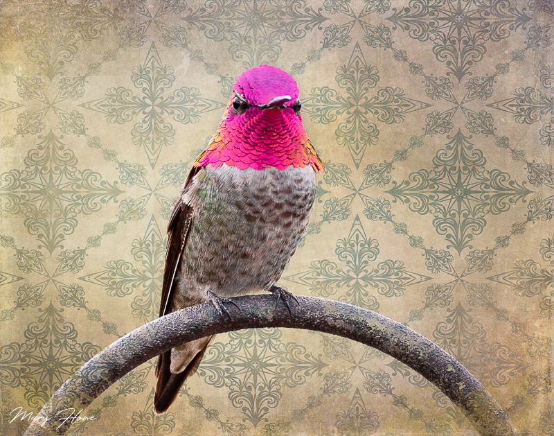 hummingbird, fine art photography