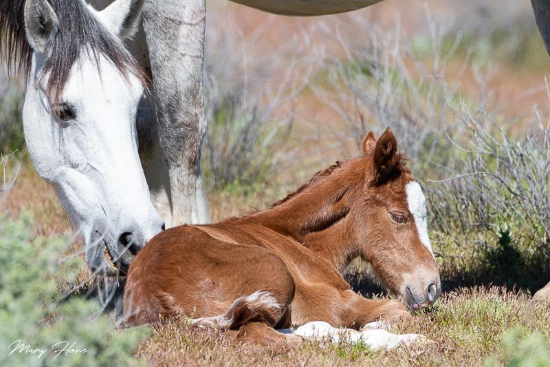Newborn wild foal