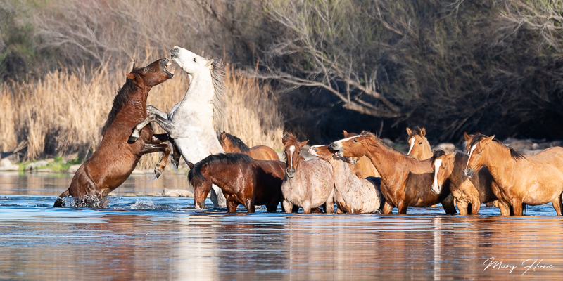 Wild Horses, Sunset and a River
