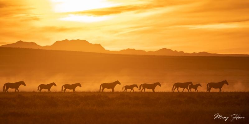 wild horse sunset