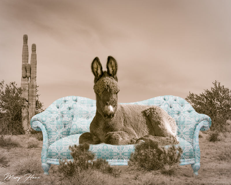 burro on a couch