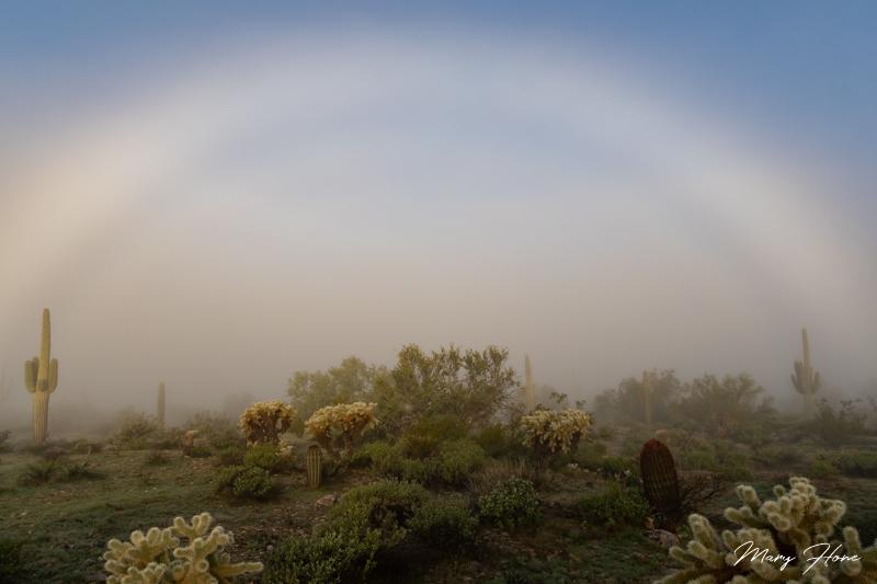 foggy desert morning