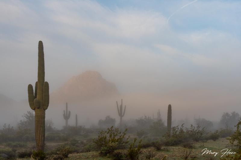 A Winter Wonderland, in the Desert