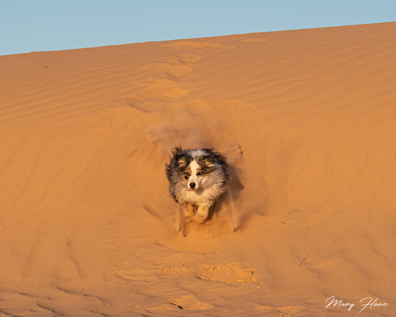 Playing at the Imperial Sand Dunes