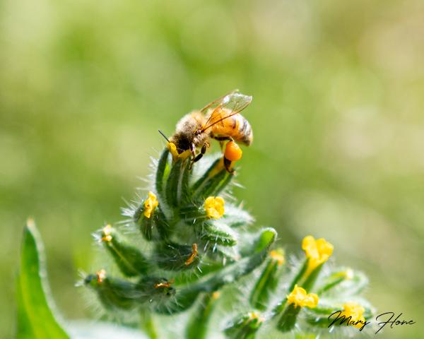 Birds, Bees, and Desert Spring Flowers