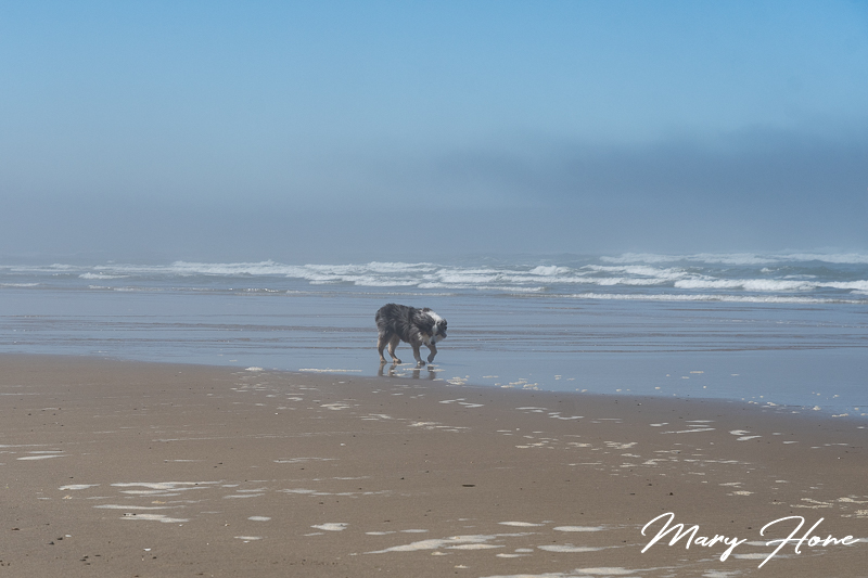 dog on the oregon coast