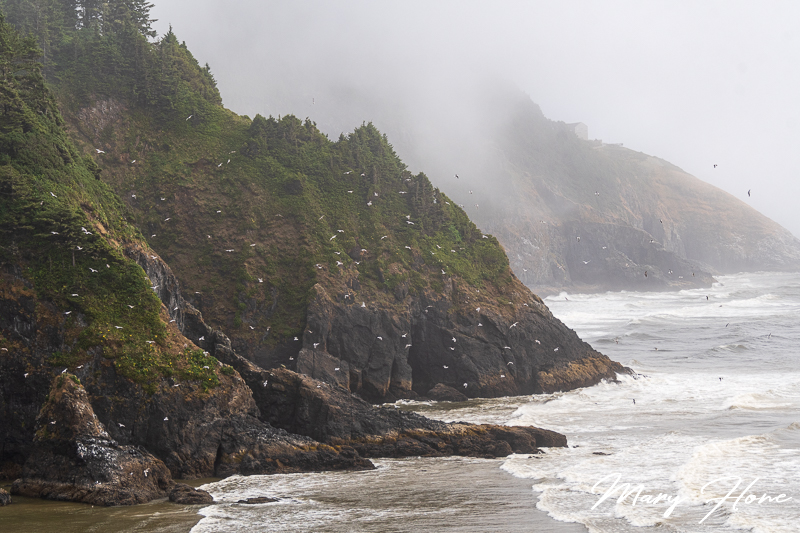 oregon coast heceta head